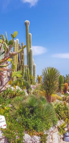 Der-exotische-Garten-auf-Eze-beherbergt-viele-Pflanzenarten-1